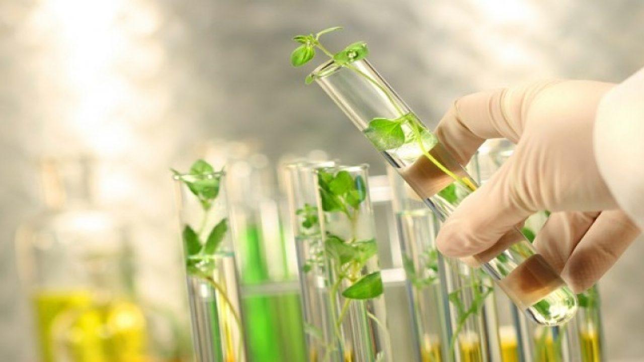 Công nghệ y sinh học